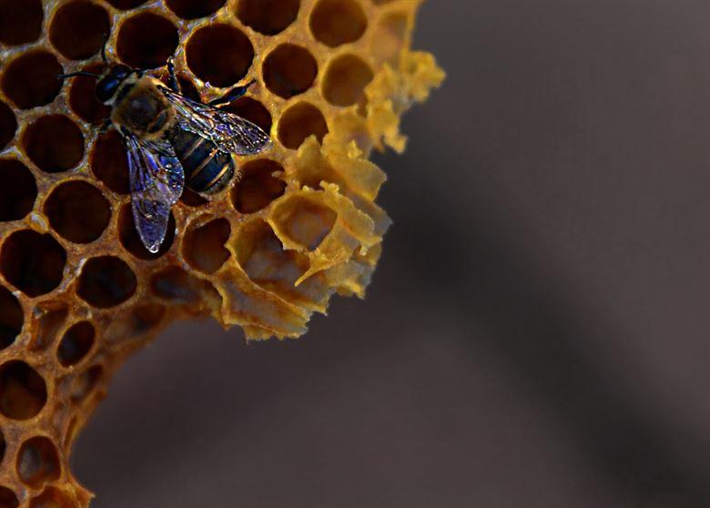 Bee-MGT