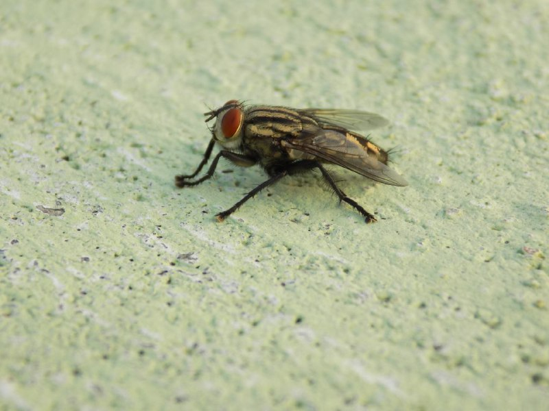 Integrated-Fly-MGT