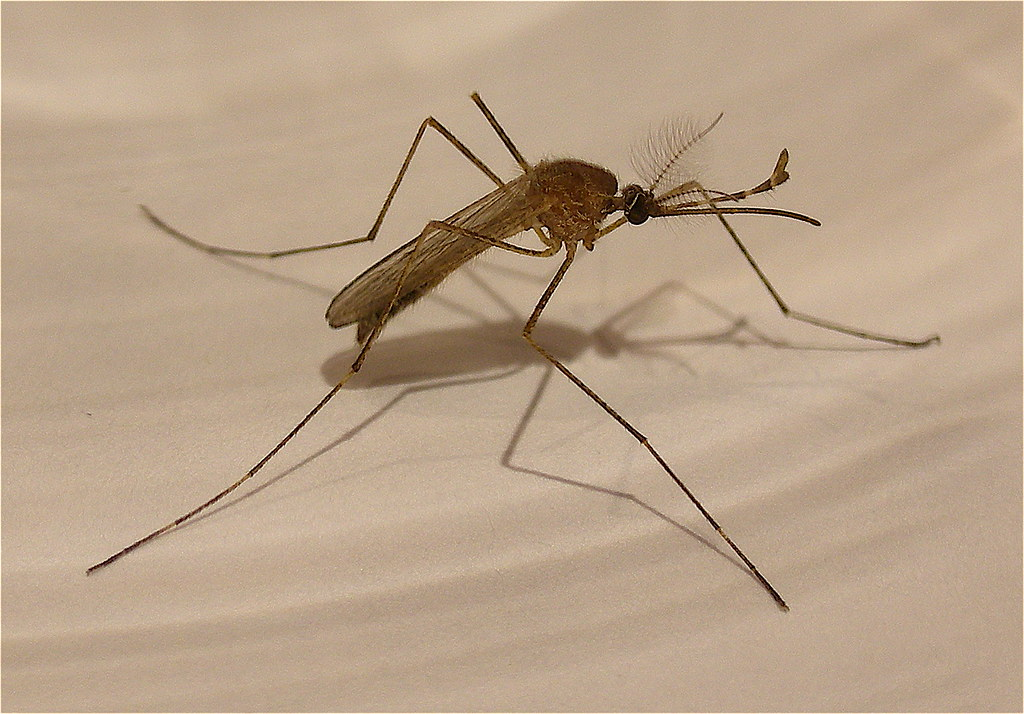 Integrated-Mosquito-MGT