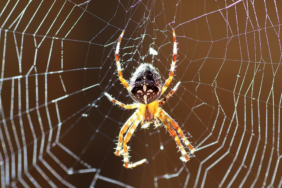 Spider-MGT